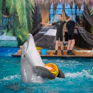 Дельфинарии, океанариумы Архипо-Осиповки