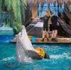 Дельфинарии, океанариумы в Архипо-Осиповке